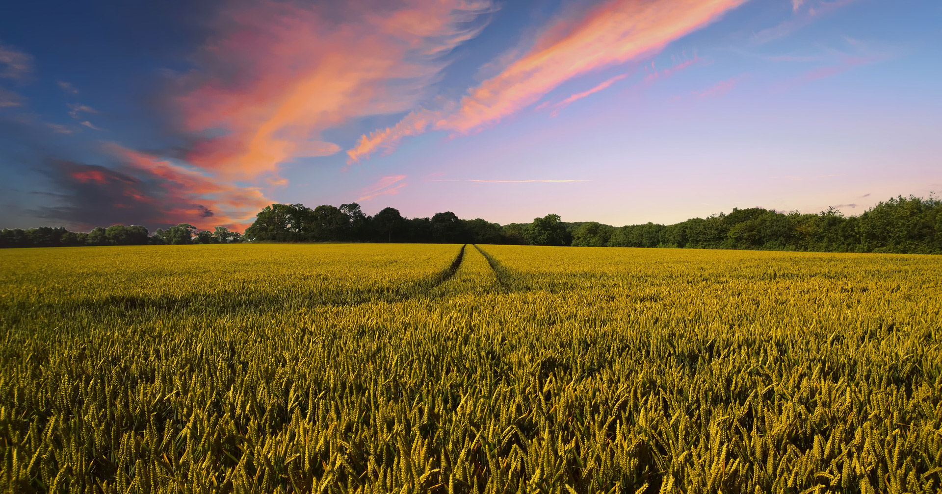sunset and landscape with crops