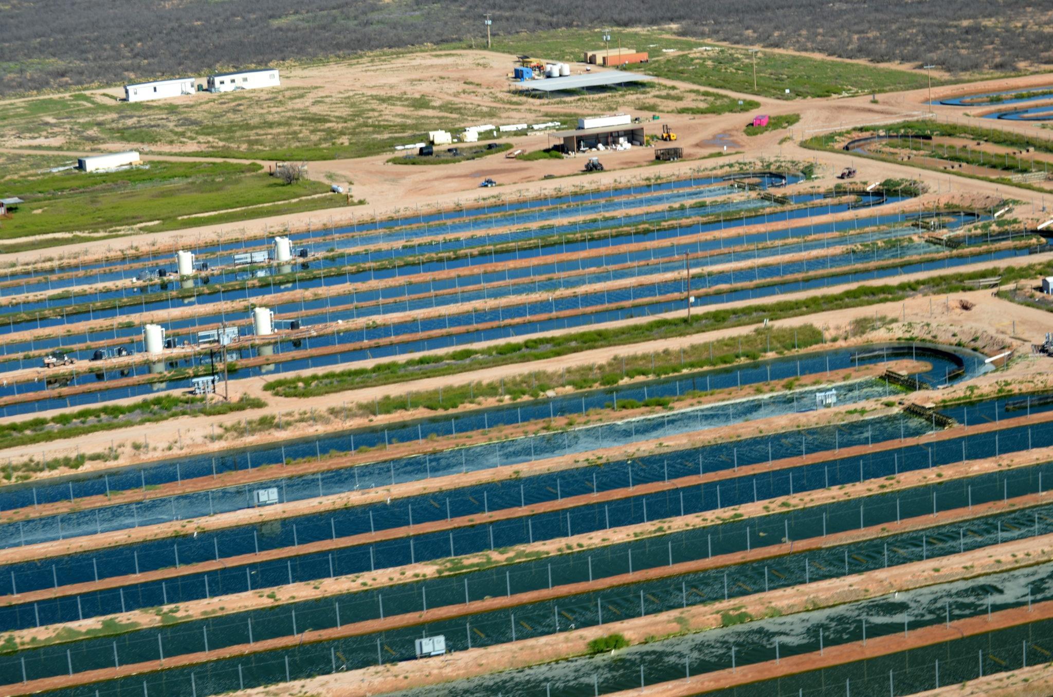 Algae cultivation farm