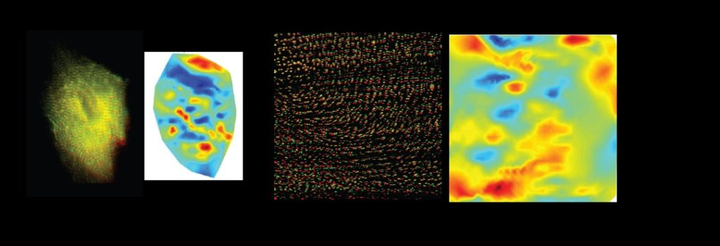 Left image shows a single beating heart cell with a high-resolution deformation map. Right image shows multiple cells displaying a muscle twitch shown with a high-resolution deformation map.