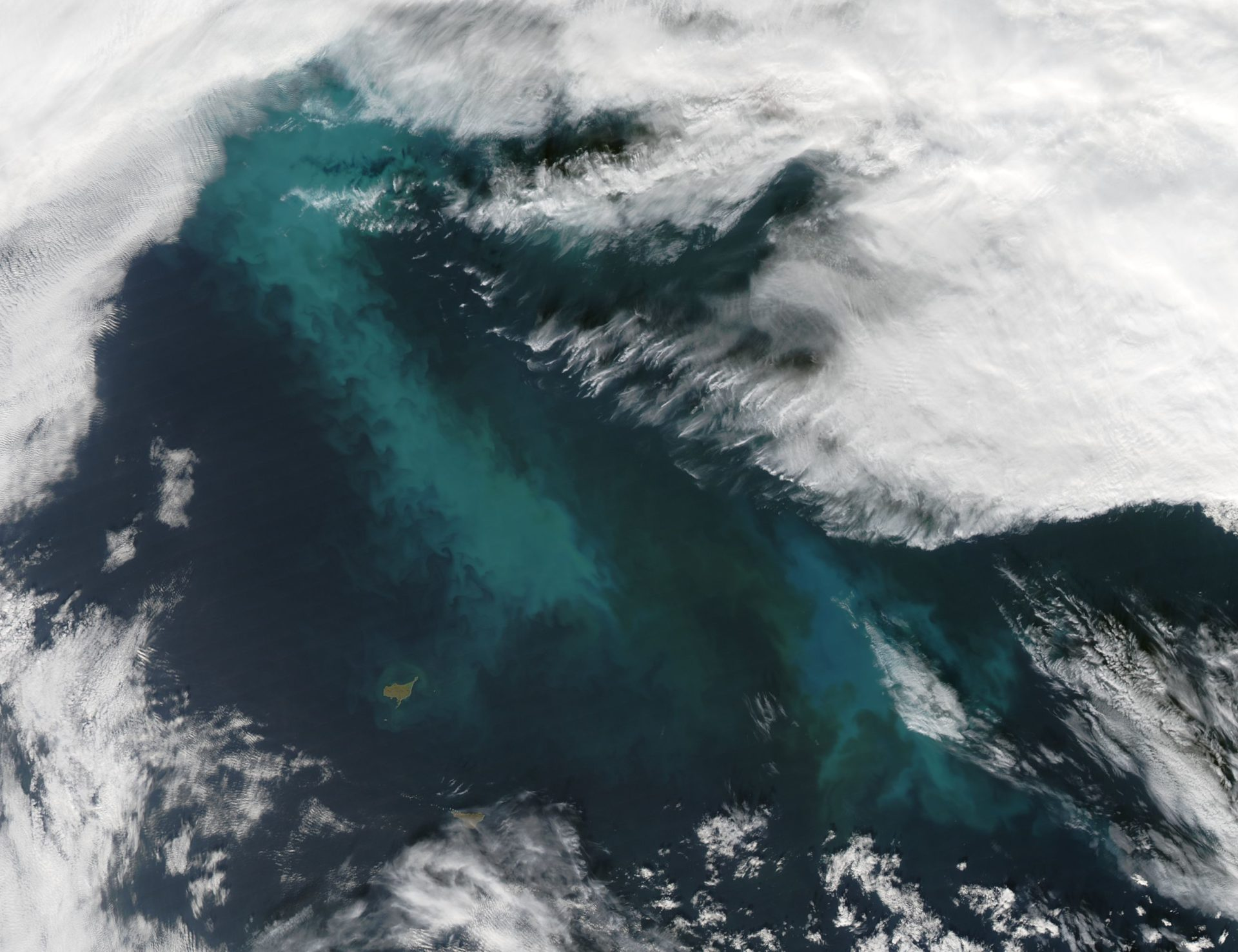 Bacteria feeding on Arctic algae blooms can seed clouds, affect climate