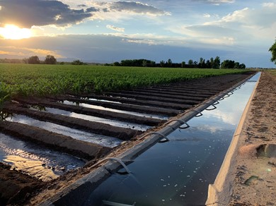 A photo of water irrigation for a farm field.