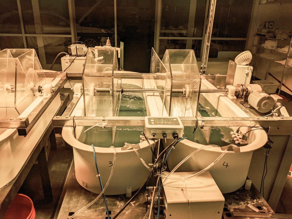 Algae ponds growing at the Powerhouse Clean Energy Institute